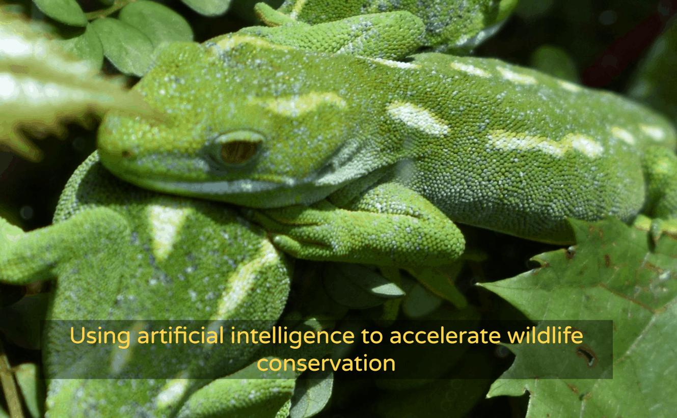 Green gecko wildlife.ai homepage
