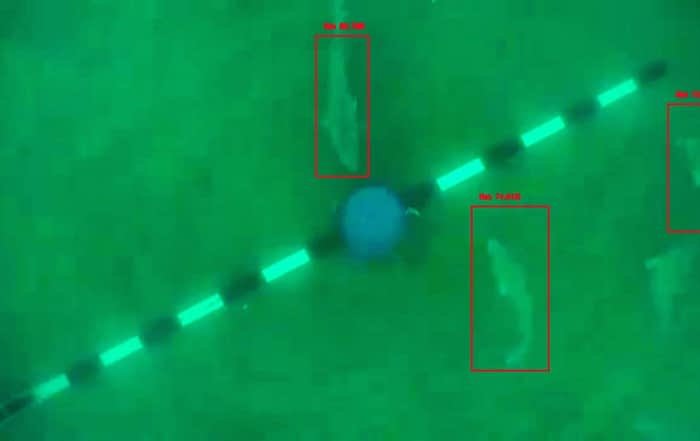 Example of the fish automatic identification of baited underwater video.